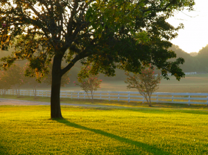 Stay at the ranch and enjoy a fall sunrise after the vinter's dinner.