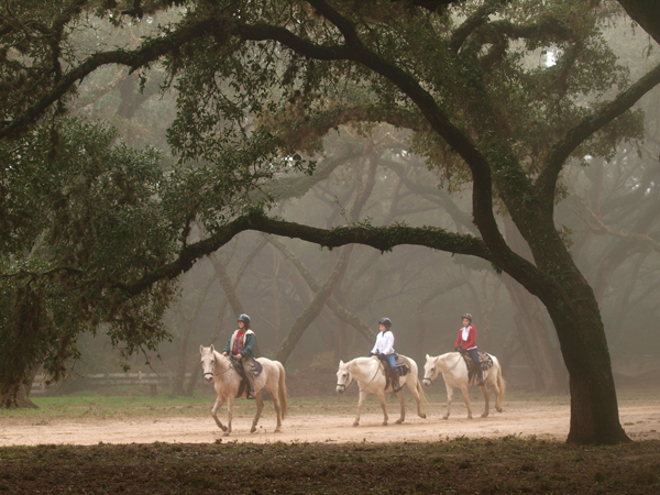 It was a beautiful mysterious horseback ride in the fog.
