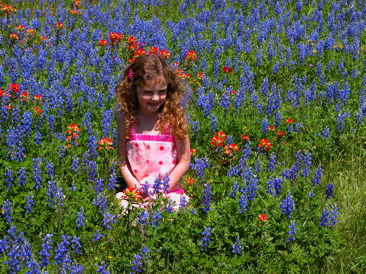 Bluebonnets are Back!