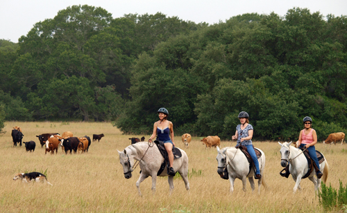 Texas Horseback Riding Lessons