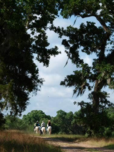 Corporate Retreat Ideas - Horseback Riding