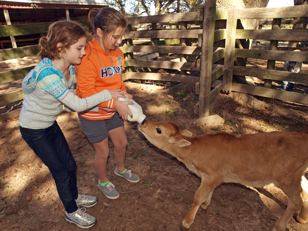 Stay at a Farm in the Texas Hill Country