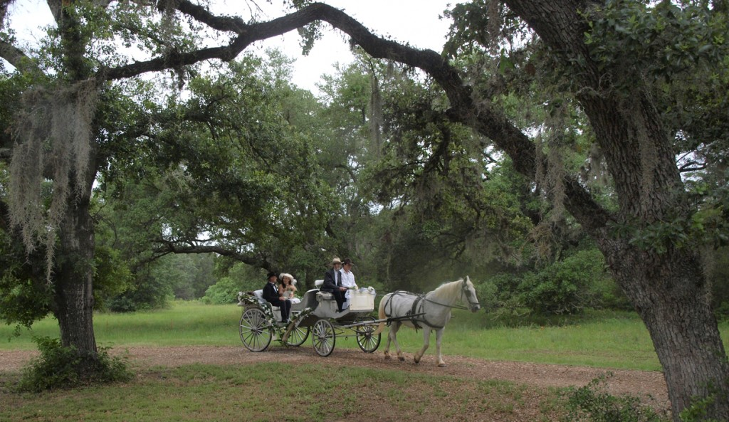wedding with a horse drawn carriage