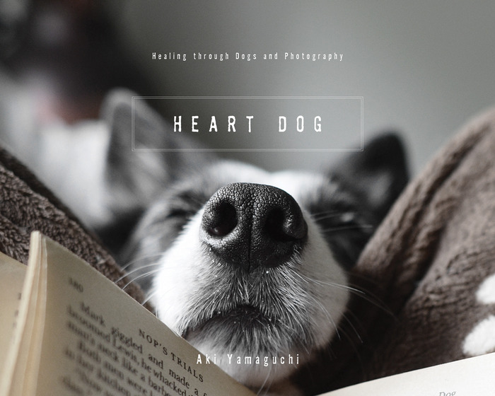 Heart Dogs : Benefiting BlissWood's Texas Border Collie Rescue