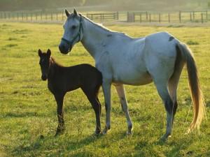 Horse Riding Classes Texas