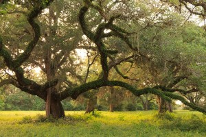 Beautiful Working Ranch in TX - Trees