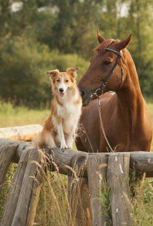 Texas dog friendly