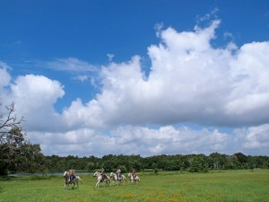A group riding horses