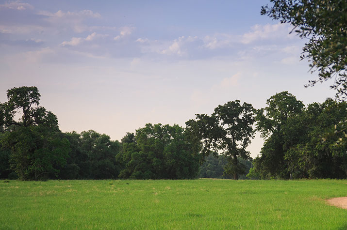 Blisswood Field