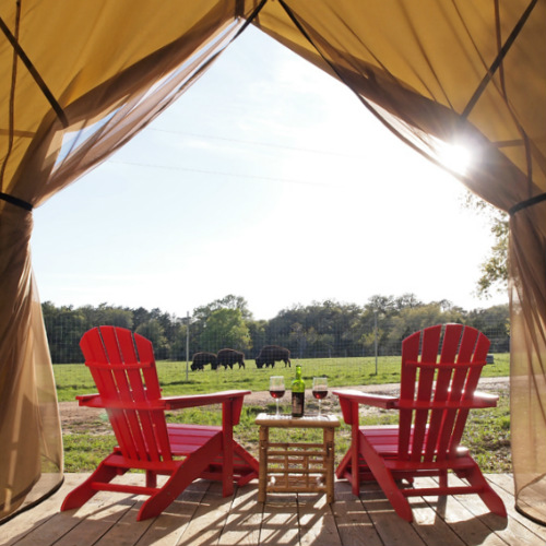 Safari Tent Views