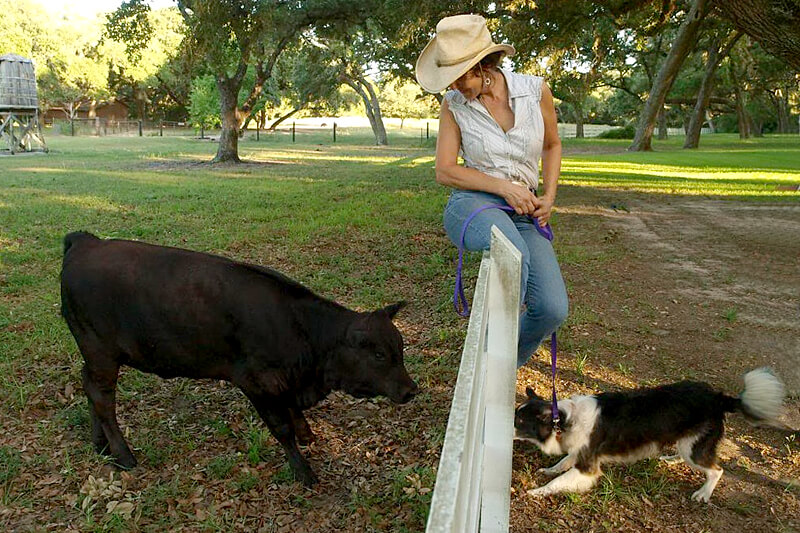 Woman sitting on fence looking down at a pig with her dog