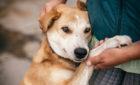 A Dog Lover's Dream Getaway