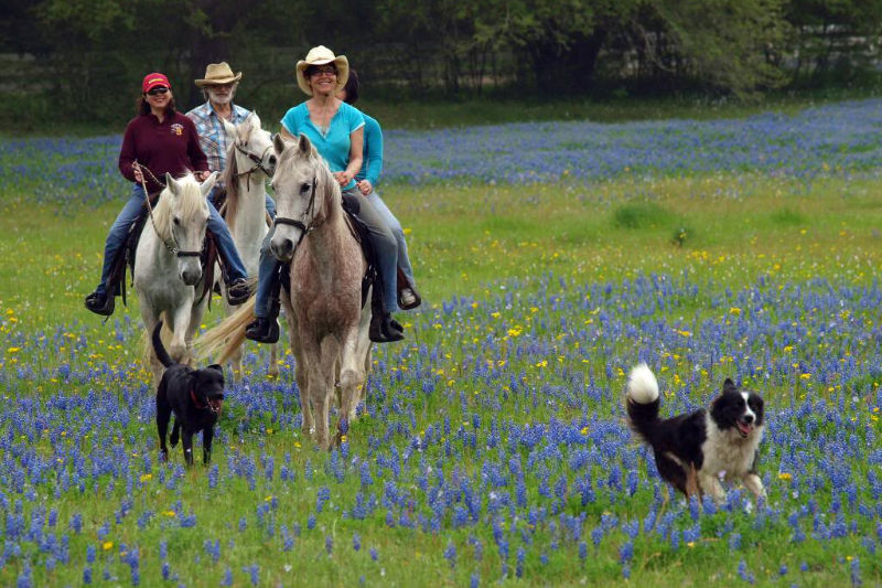 Family riding horses in a Blisswood Bed and Breakfast field