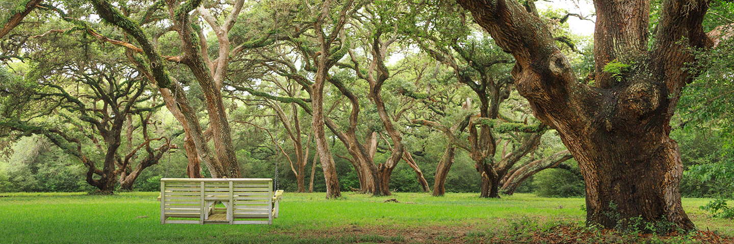 Beautiful views of oak trees at BlissWood Ranch