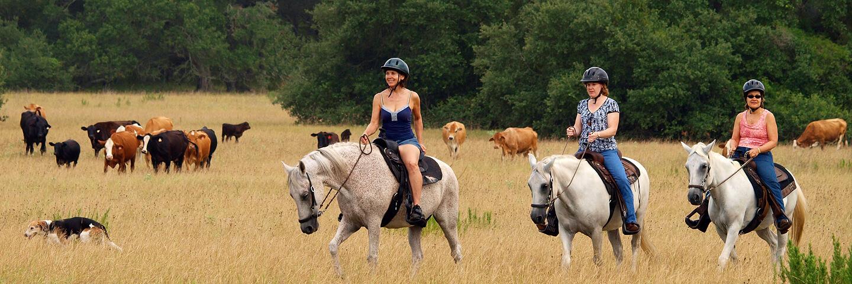 Several people horseback riding