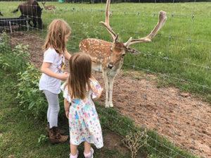kids feeding deer on Texas ranch feeding tour