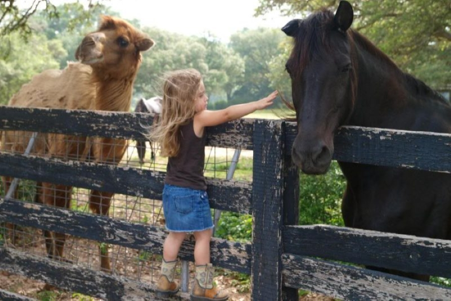 a young girl petting a horse