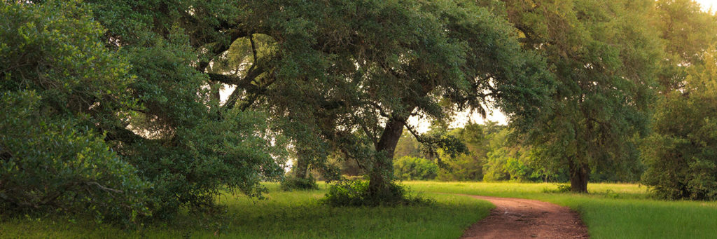 oak trees on property
