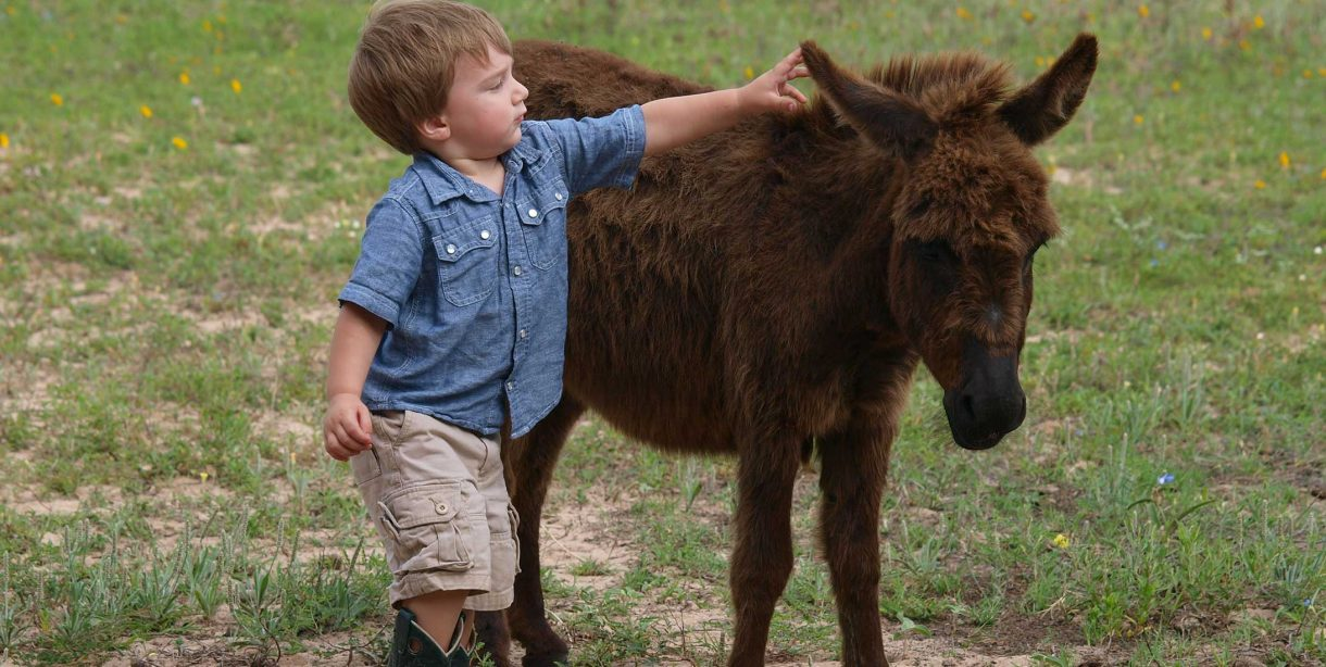 Young boy petting ranch animals
