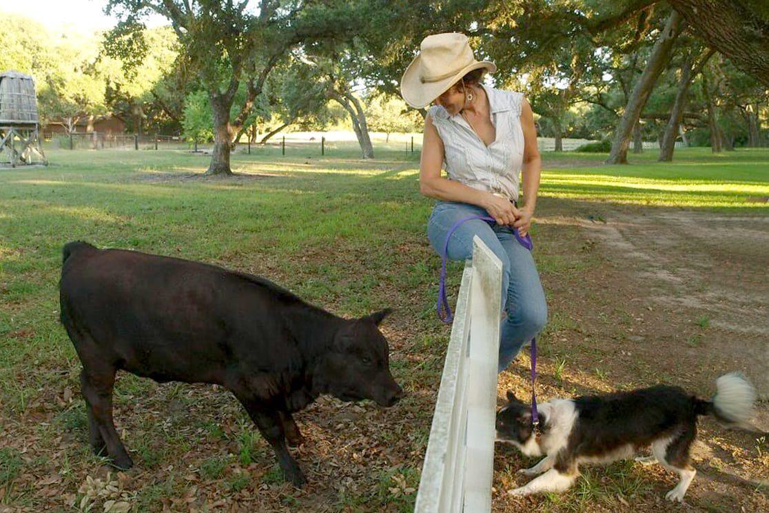 dog meeting cow at ranch