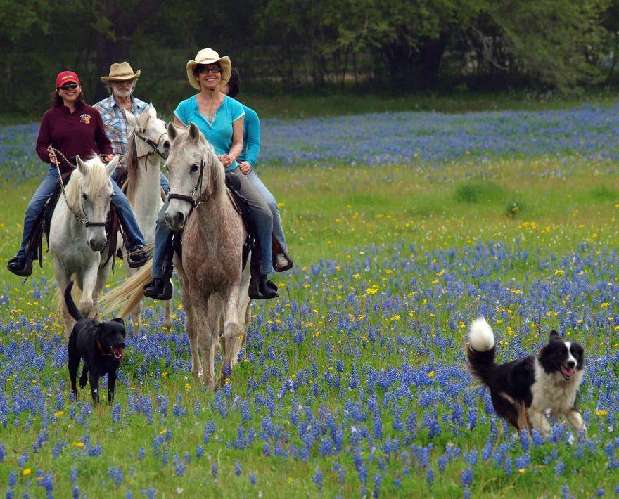 Small group on a horseback ride through a meadow