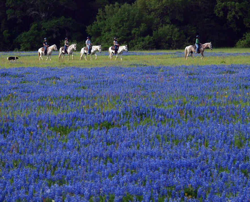 meadow of blue flowers with a group of horseback riders behind