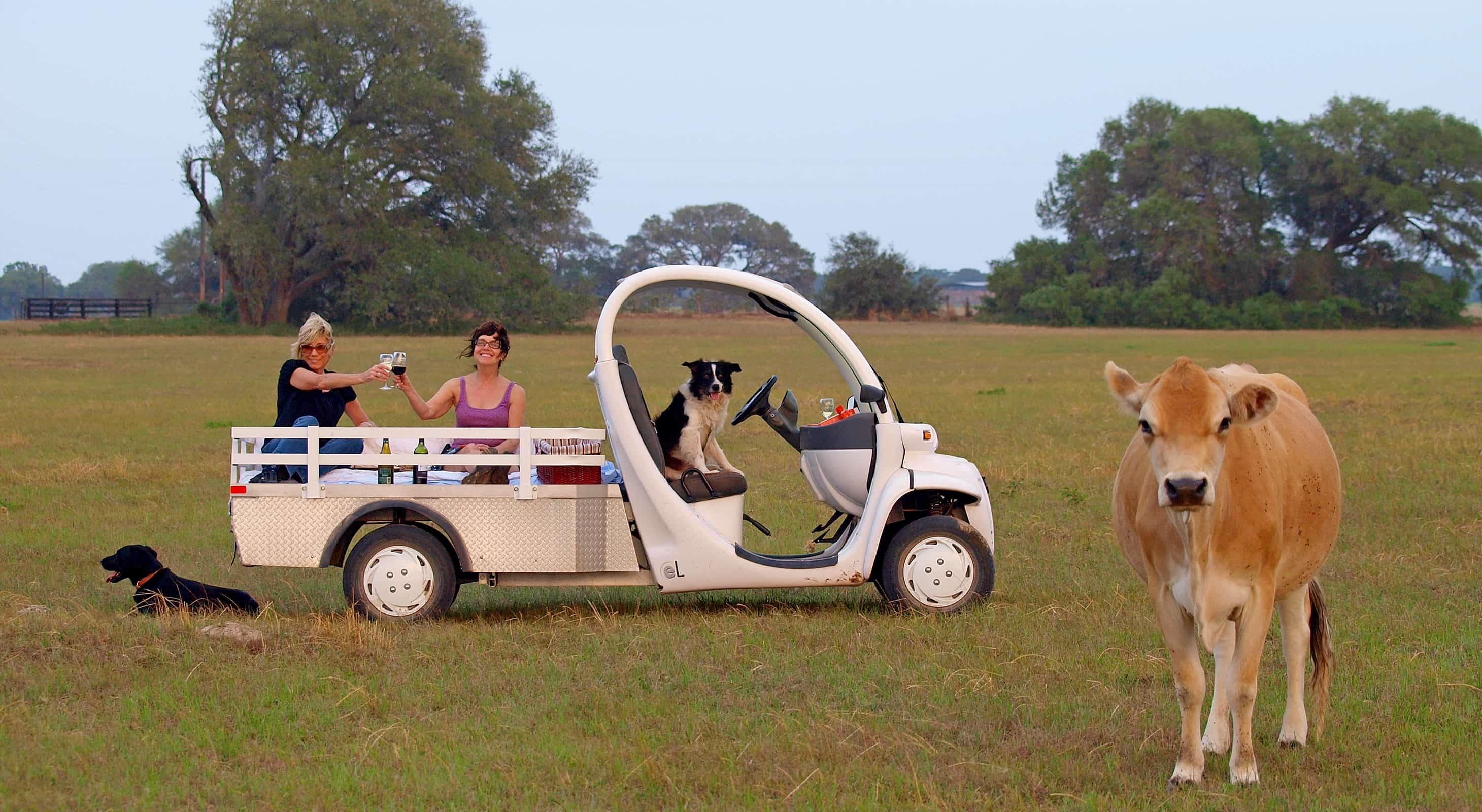 golf cart touring cows at ranch