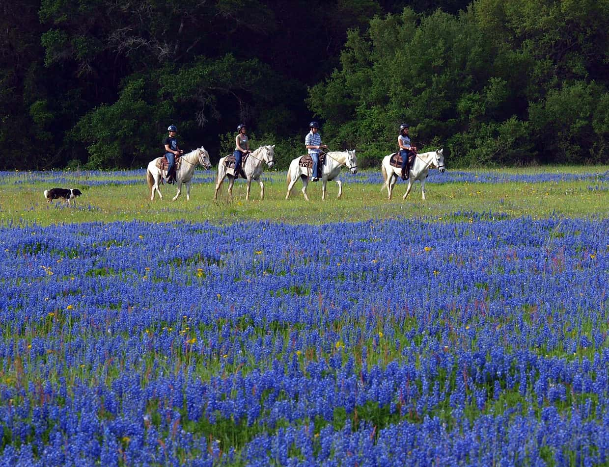 group horse trail ride in Texas