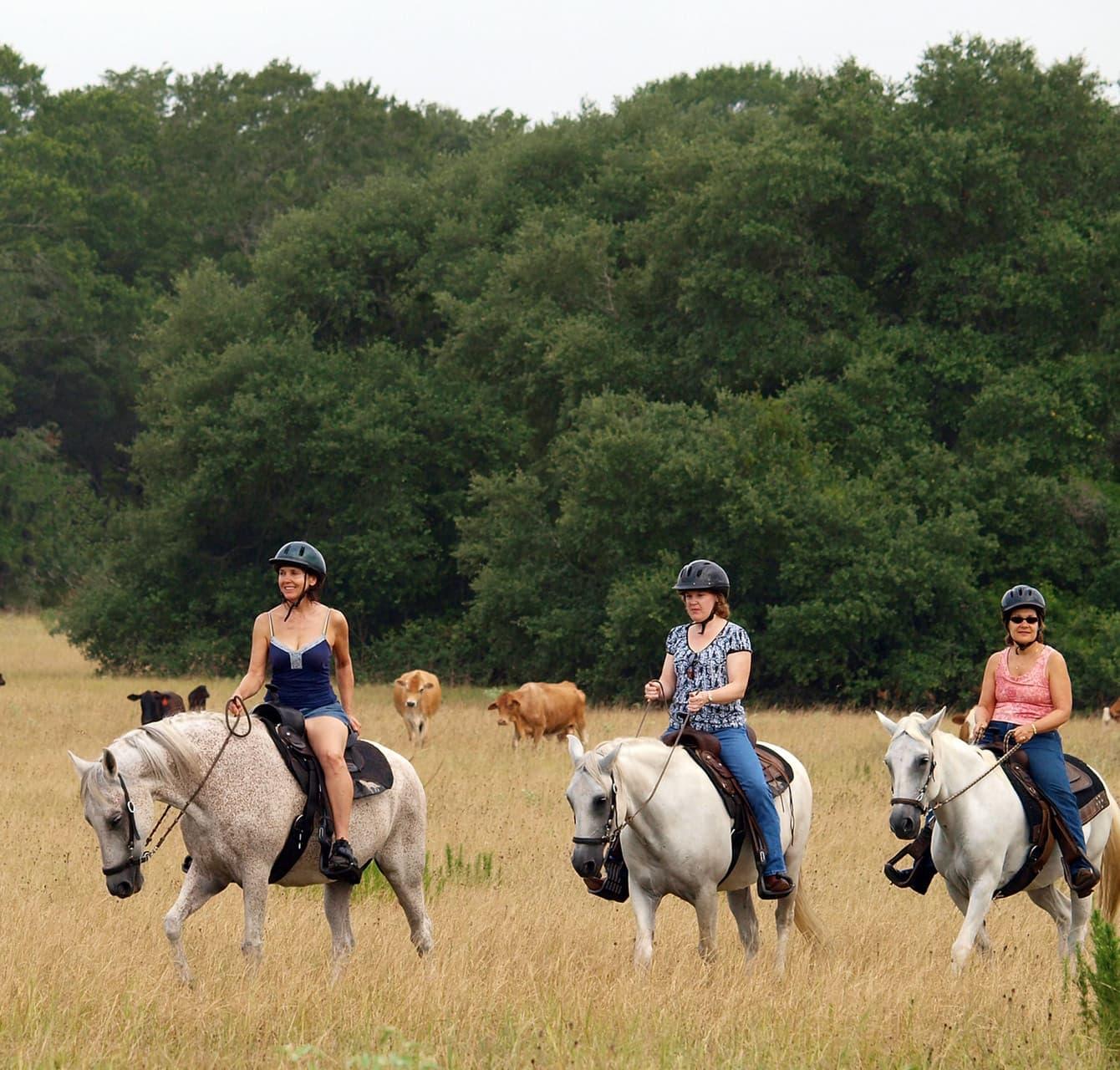 group on a horseback ride