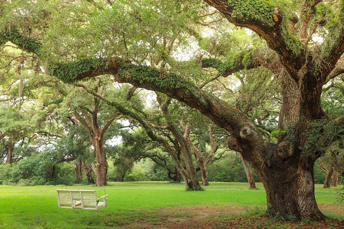 swing hanging from an old oak tree