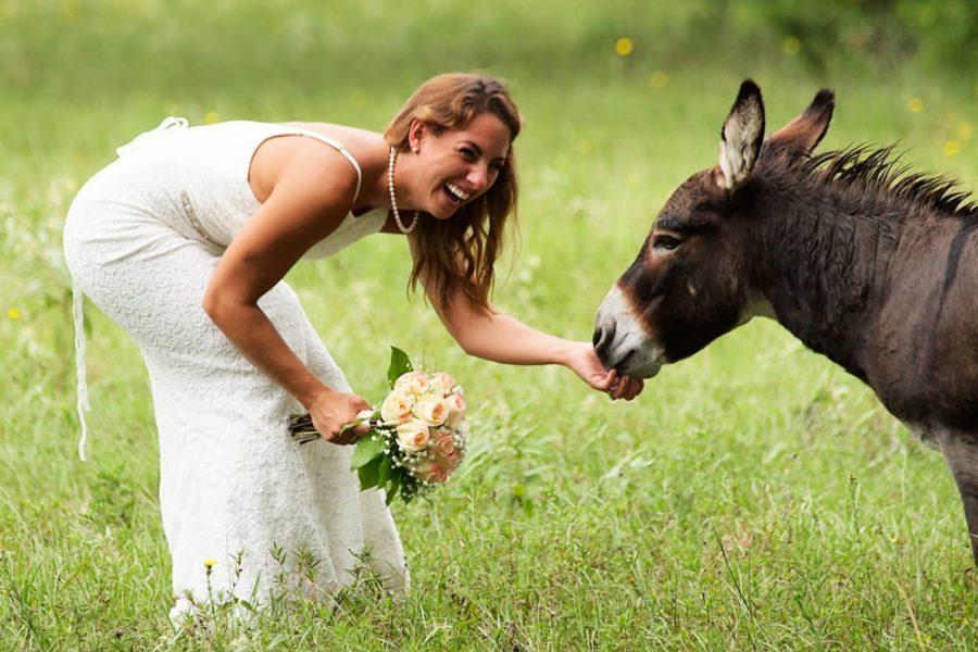 Bride feeding a Donkey at BlissWood