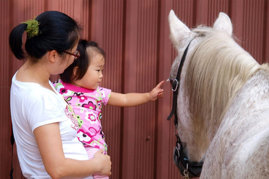 Baby petting a white horse on a Texas kid-friendly vacation