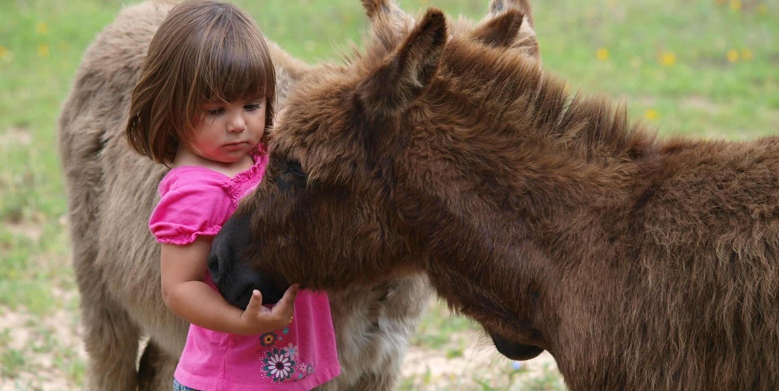 Little girl petting ranch animals