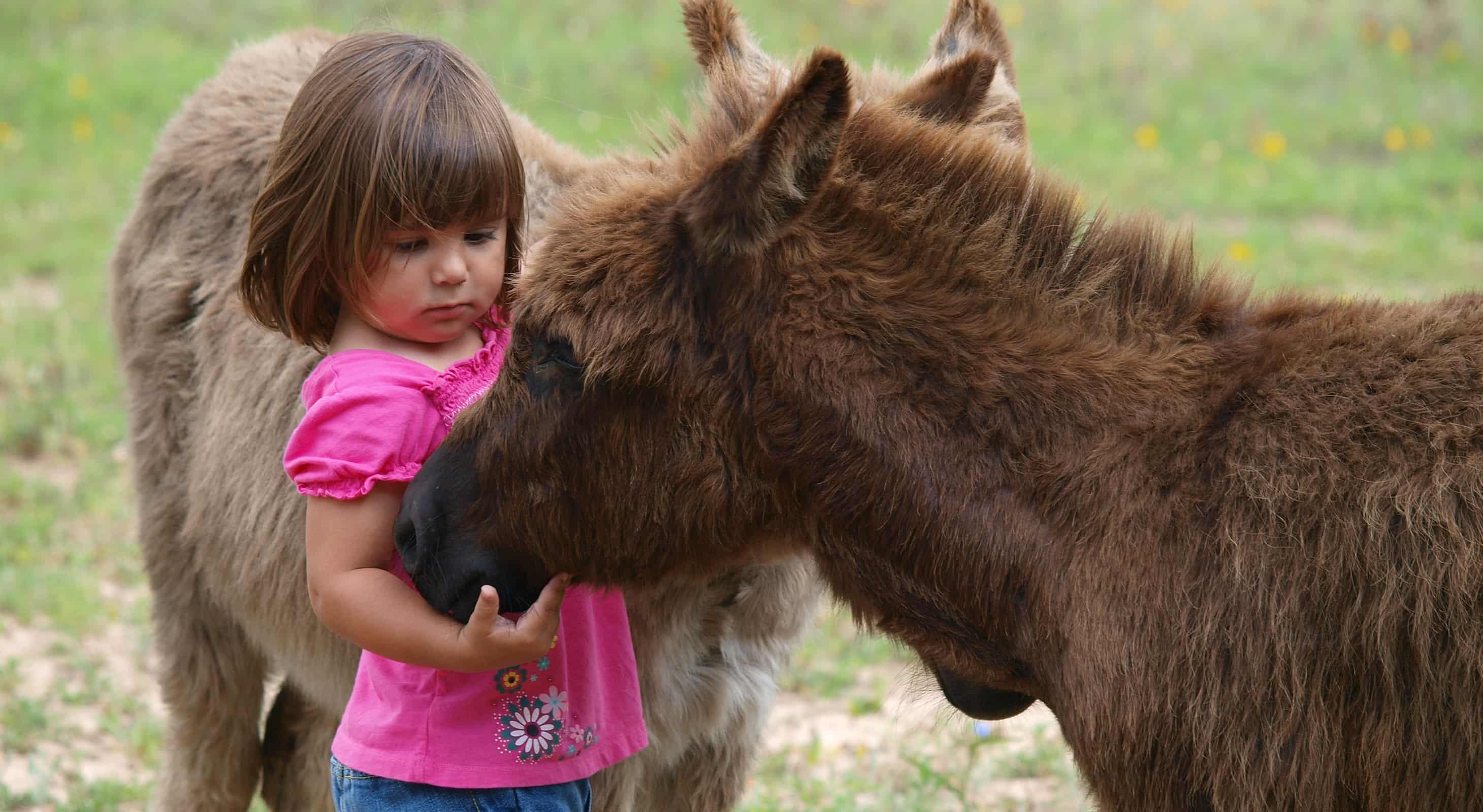 Little girl petting ranch animals