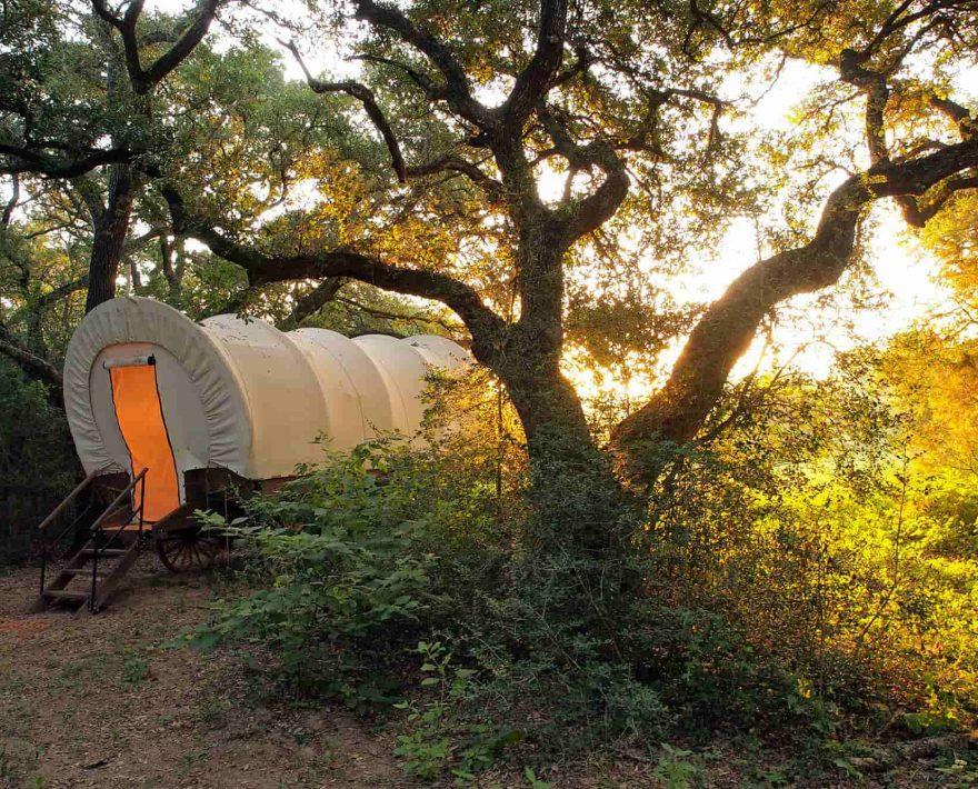 Conestoga Covered Wagon in the trees