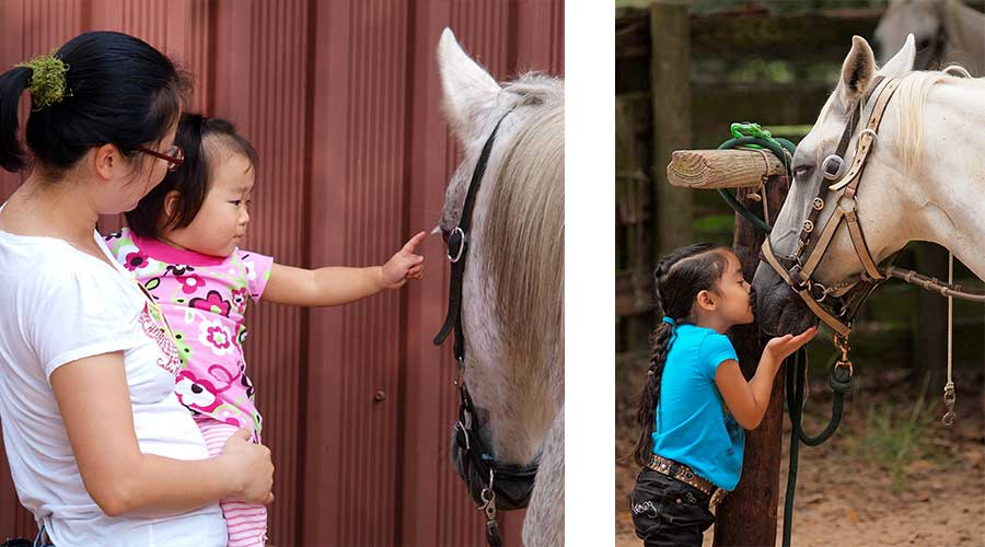 Texas horse stables and child kissing a horse